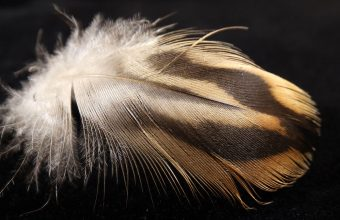 Feather Wallpaper 34 1920x1079 340x220