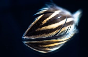Feather Wallpaper 47 2048x1365 340x220