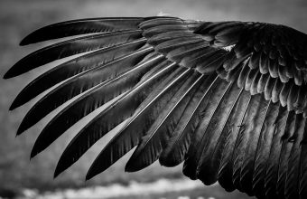 Feather Wallpaper 55 2048x1365 340x220