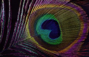 Feather Wallpaper 56 2048x1365 340x220