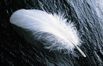 Feather White Feathers Wood 1680x1050 340x220