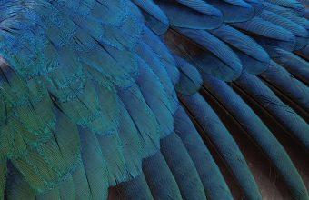 Feathers Black Background Blue 1920x1200 340x220