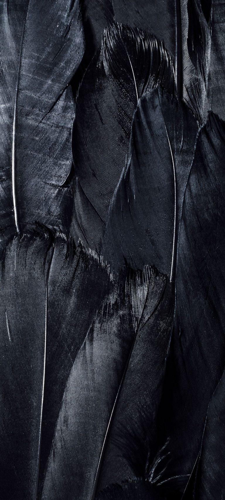 Feathers Black Dark 1080x2400 768x1707