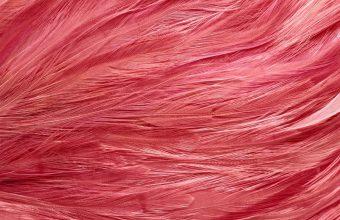 Feathers Color Colorful Shape 1920x1200 340x220