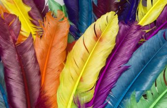 Feathers Colorful Bright 1920x1200 340x220