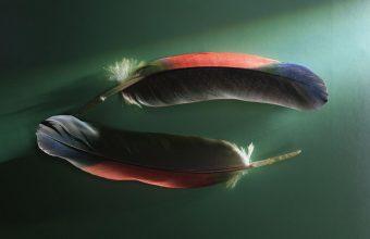 Feathers Couple Shadow Shape 2560x1600 340x220
