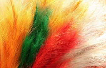 Feathers Fur Colorful 1680x1050 340x220