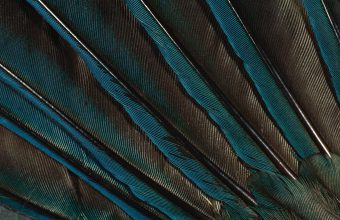 Feathers Peacock Background Dark 1920x1200 340x220