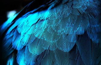 Feathers Texture Background Blue 1920x1200 340x220
