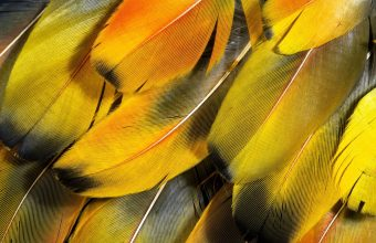 Feathers Yellow Striped 1920x1200 340x220