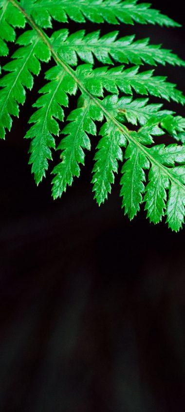 Fern Plant Leaf 1080x2400 380x844