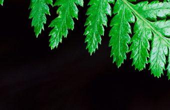 Fern Plant Leaf Wallpaper 1440x3040 340x220
