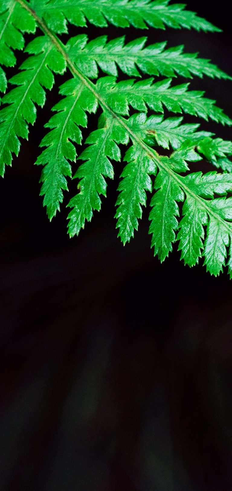 Fern Plant Leaf Wallpaper 1440x3040 768x1621