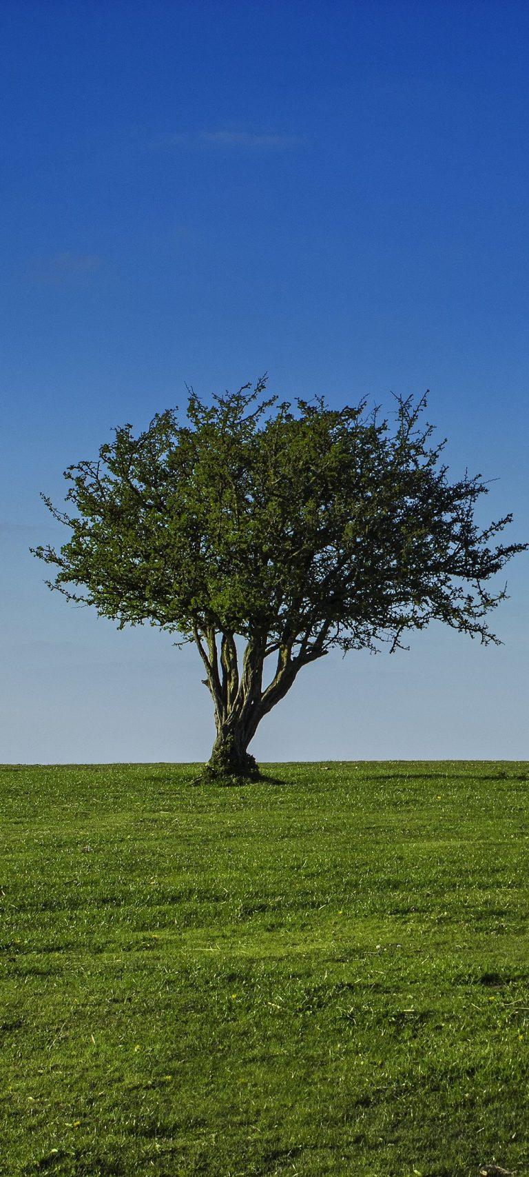 Field Sky Tree Grass Crown 1080x2400 768x1707