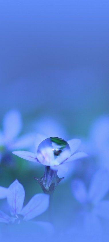 Flower Glare Drops 1080x2400 380x844