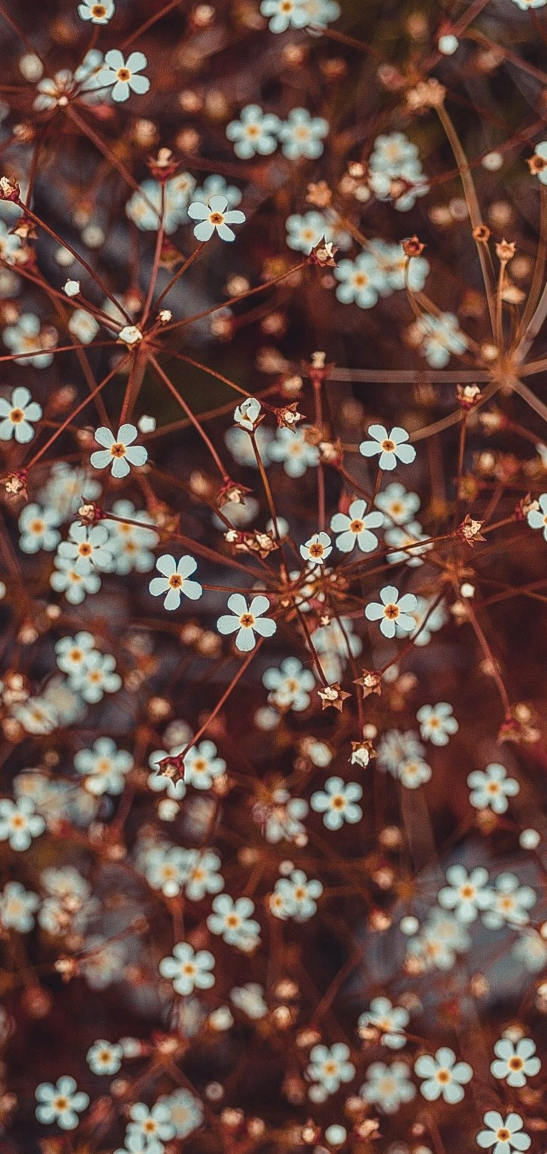 Flowers Blooming Branches Wallpaper 1440x3040 768x1621