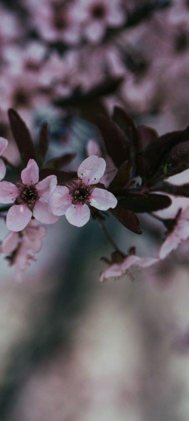 Flowers Branch Bloom Spring 1080x2400 380x844