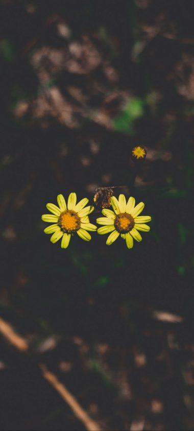 Flowers Couple Stem Dark 1080x2400 380x844