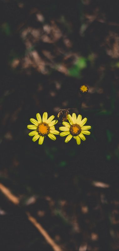 Flowers Couple Stem Dark Wallpaper 1440x3040 380x802