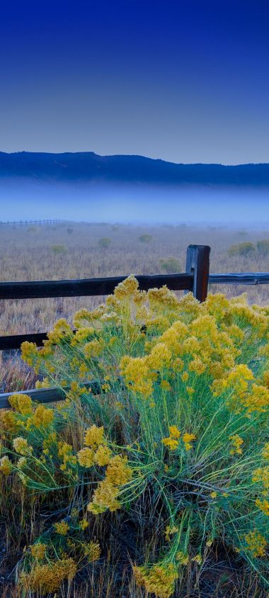 Flowers Grass Field Fence 1080x2400