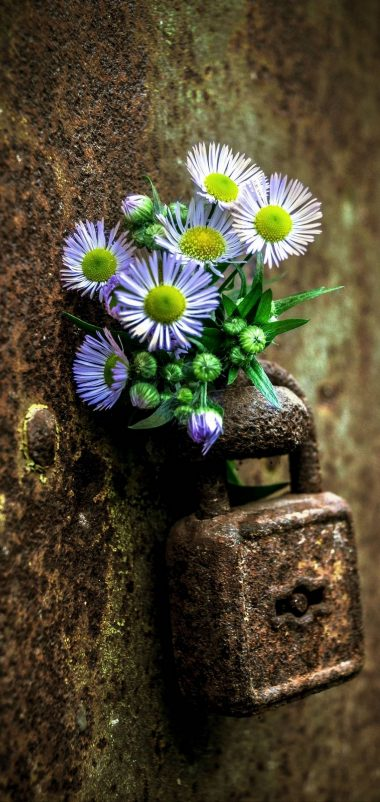 Flowers Lock Rust Wallpaper 1440x3040 380x802