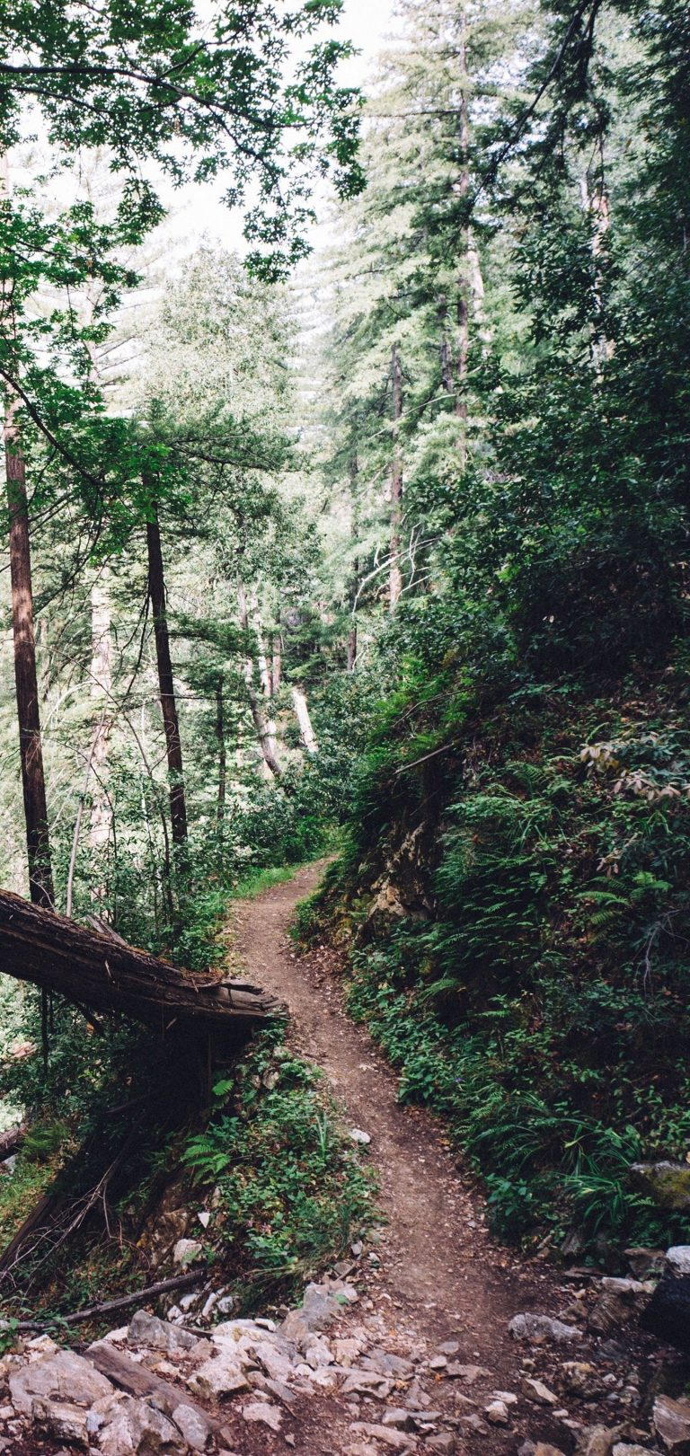 Forest Trail Trees Wallpaper 1440x3040 768x1621