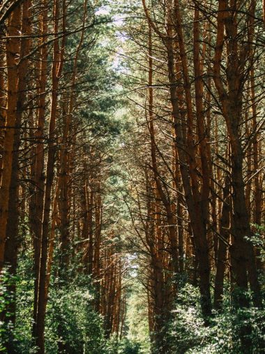 Forest Trees Trail 768x1024 380x507