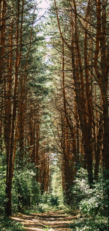 Forest Trees Trail Wallpaper 1440x3040 380x802