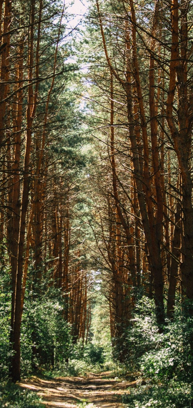 Forest Trees Trail Wallpaper 1440x3040 768x1621