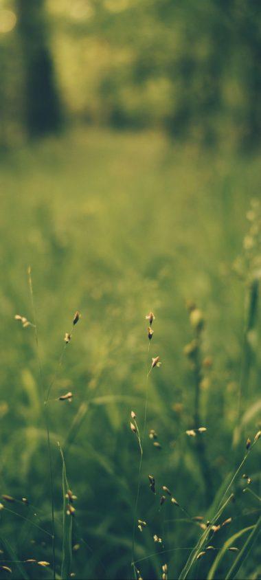 Grass Blur Field 1080x2400 380x844