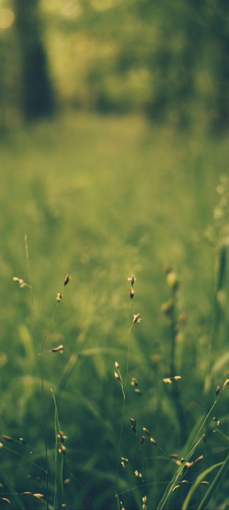 Grass Blur Field 1080x2400 768x1707