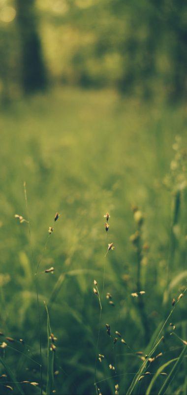 Grass Blur Field Wallpaper 1440x3040 380x802