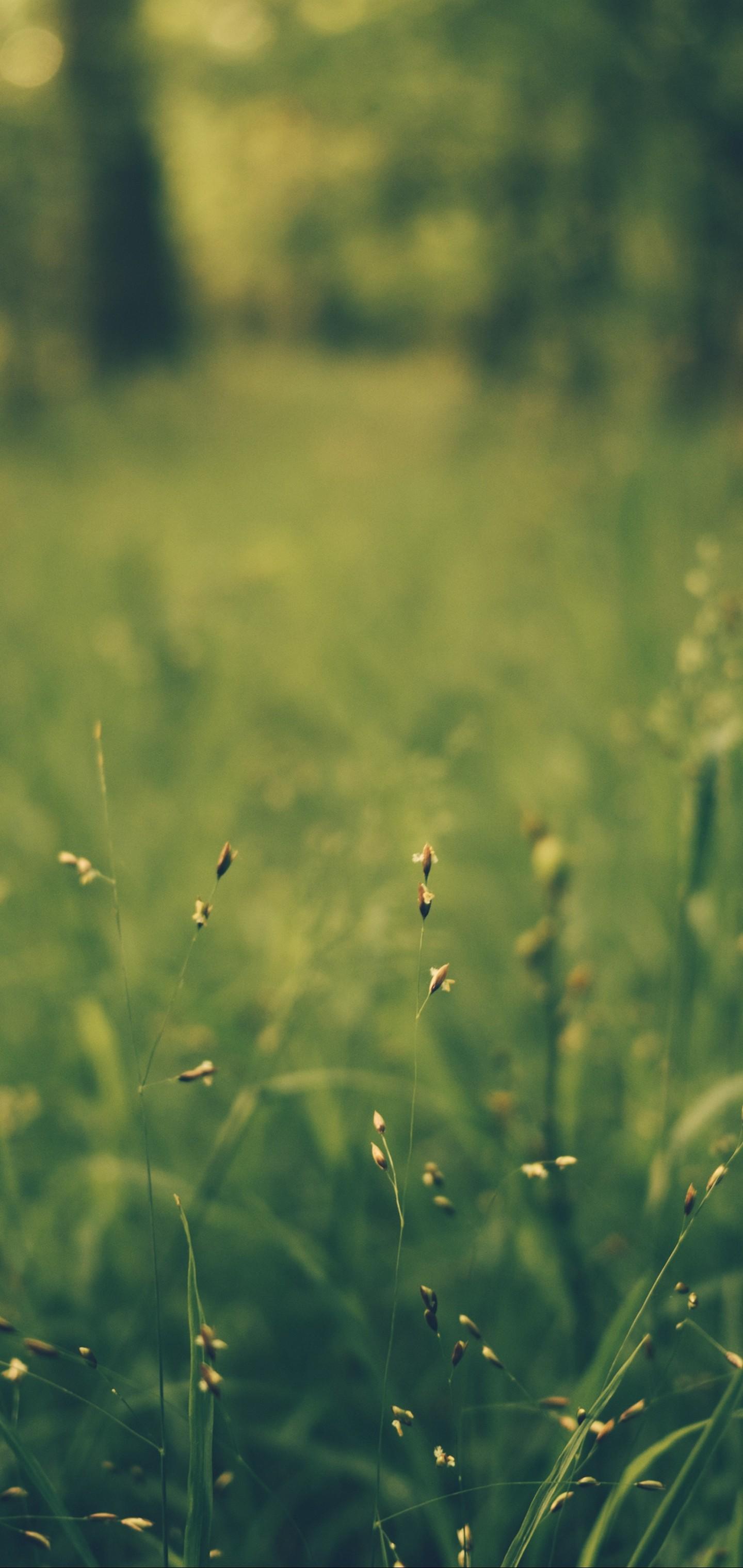 Grass Blur Field Wallpaper 1440x3040