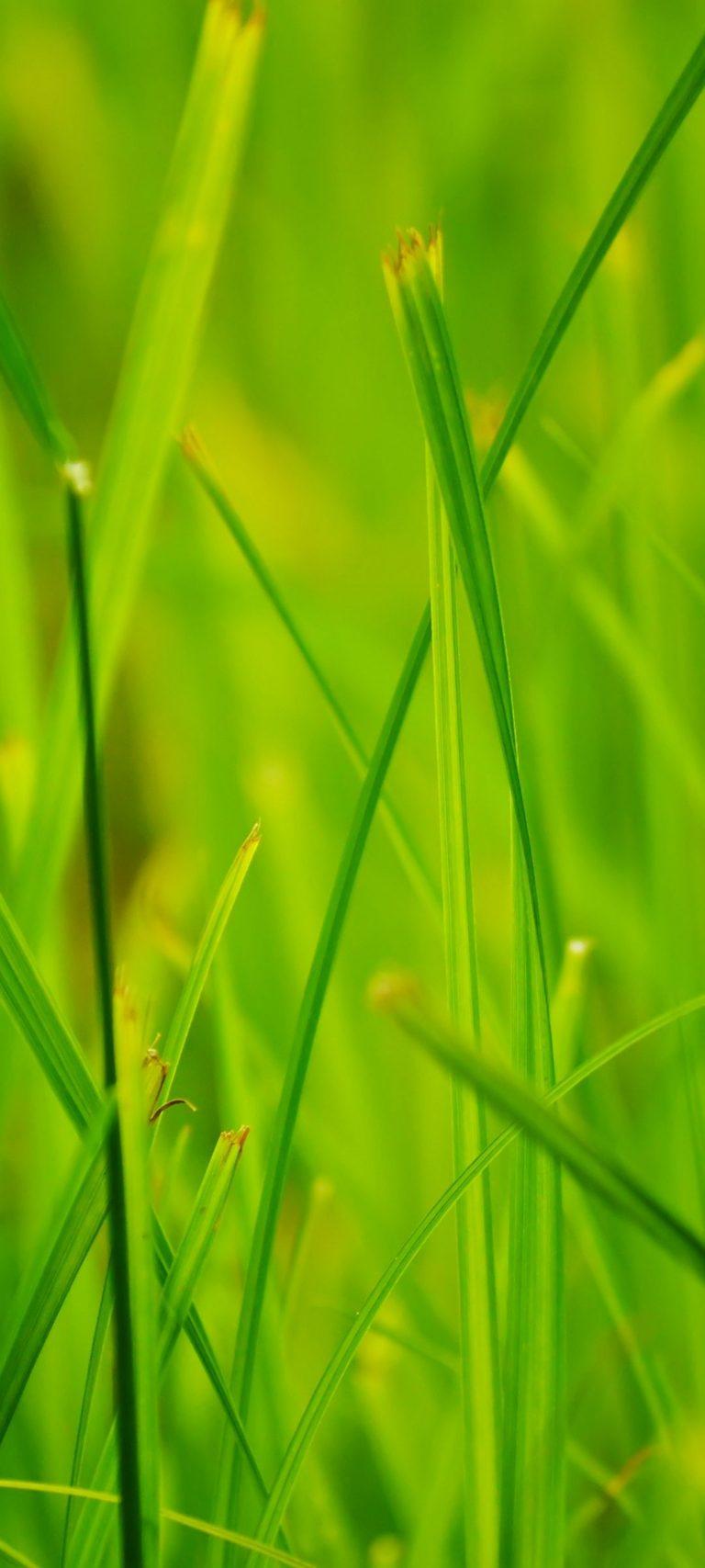 Grass Summer Nature Close Up 1080x2400 768x1707