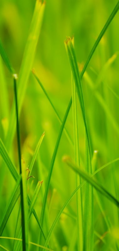 Grass Summer Nature Close Up Wallpaper 1440x3040 380x802