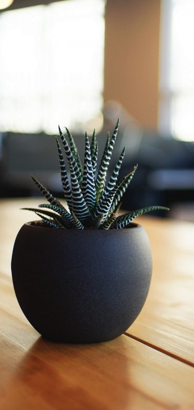 Houseplant Pot Table Wallpaper 1440x3040 380x802