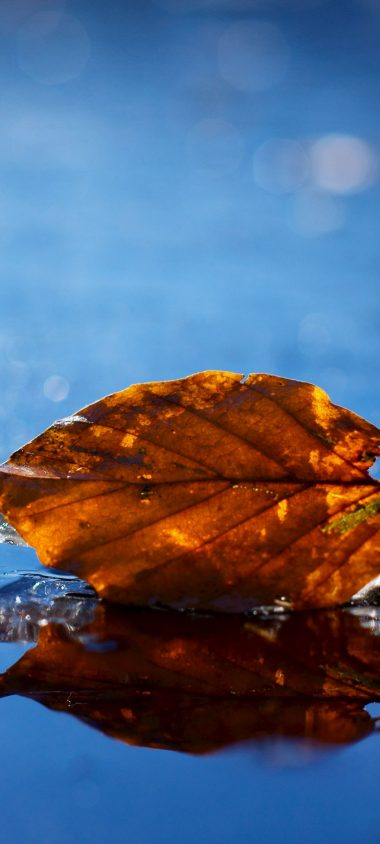 Leaf Autumn Fallen Dry Water Liquid 1080x2400 380x844