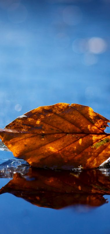 Leaf Autumn Fallen Dry Water Liquid Wallpaper 1440x3040 380x802