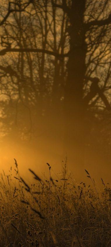 Light Sun Ears Outlines Trees 1080x2400 380x844