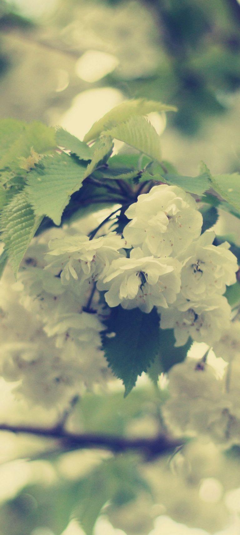 Macro Flowers White Branch 1080x2400 768x1707