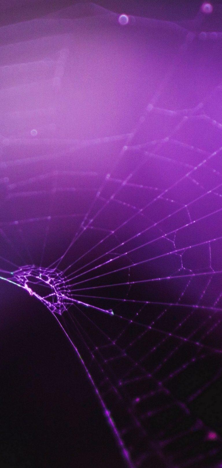 Macro Spider Purple Wallpaper 1440x3040 768x1621