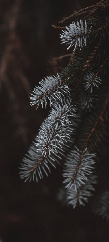 Macro Spruce Branches 1080x2400 380x844