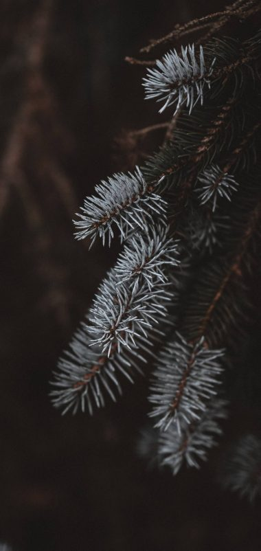 Macro Spruce Branches Wallpaper 1440x3040 380x802