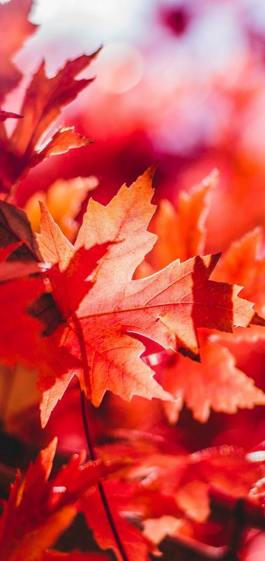 Maple Leaves Reflections Wallpaper 1440x3040 380x802