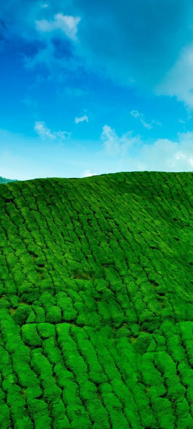 Mountains Tea Plantations Green 1080x2400 380x844