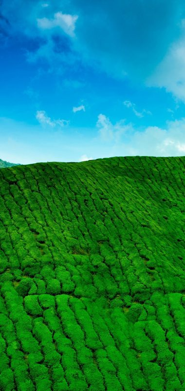 Mountains Tea Plantations Green Wallpaper 1440x3040 380x802