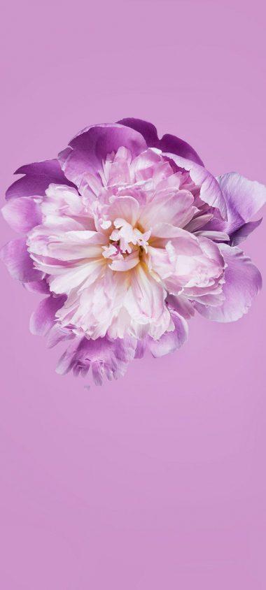 Pink Petals Flower 1080x2400 380x844