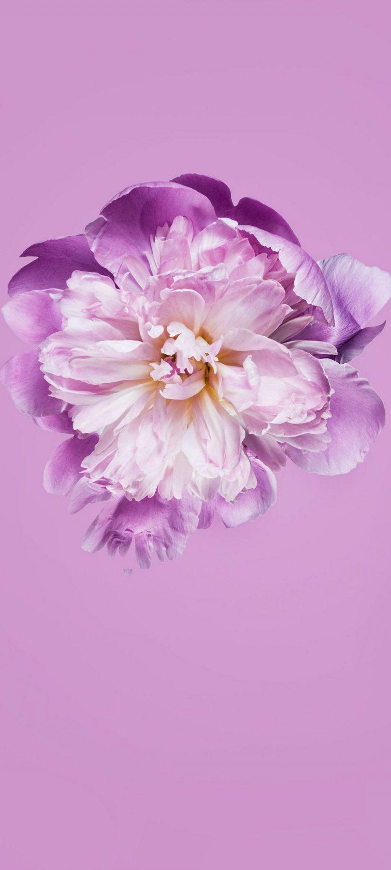 Pink Petals Flower 1080x2400 768x1707