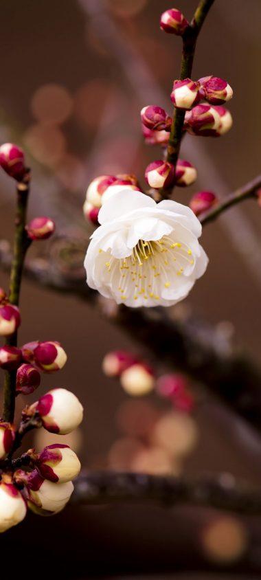 Plant Flower Blossom Branch Spring 1080x2400 380x844