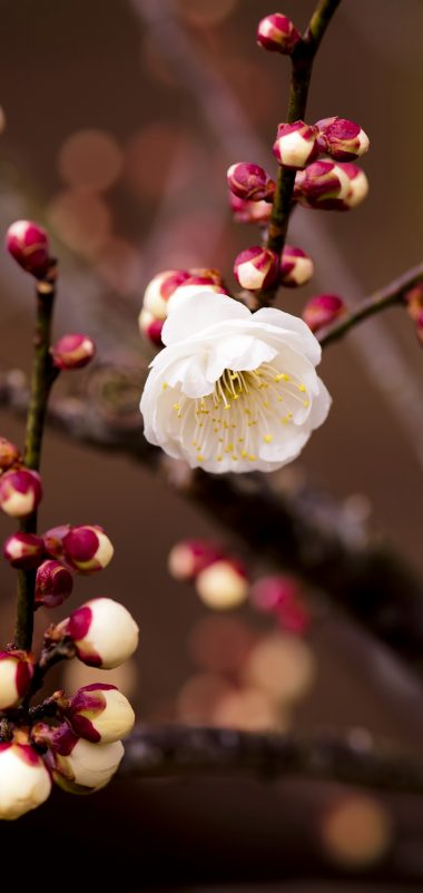 Plant Flower Blossom Branch Spring Wallpaper 1440x3040 380x802